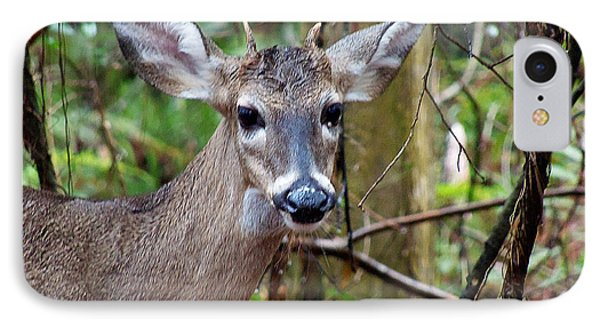 Spike Buck Whitetail Portrait IPhone Case by Chris Mercer