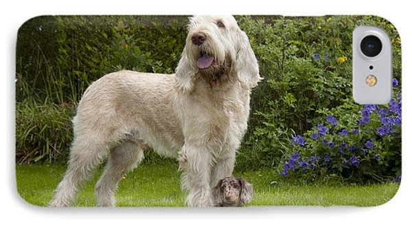 Spinone With Mini Dachshund IPhone Case by John Daniels