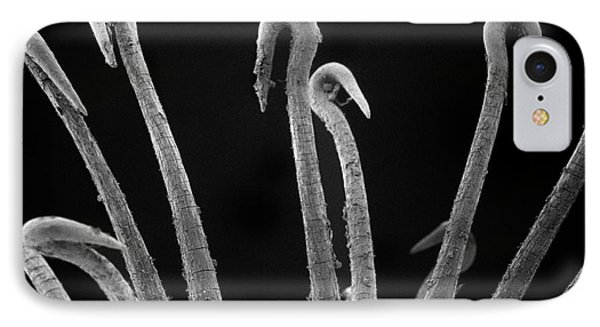Spiny Cocklebur Sem Phone Case by Albert Lleal