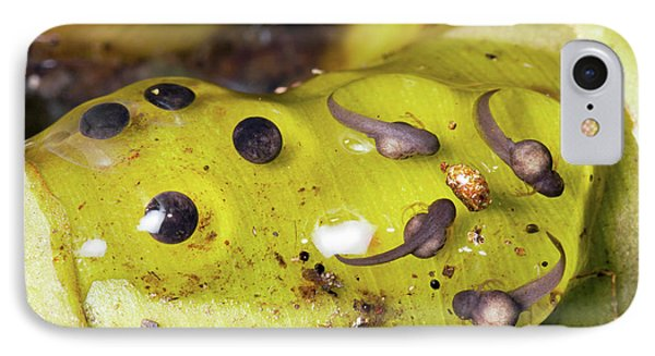 Splash-back Poison Frog Eggs IPhone Case by Dr Morley Read