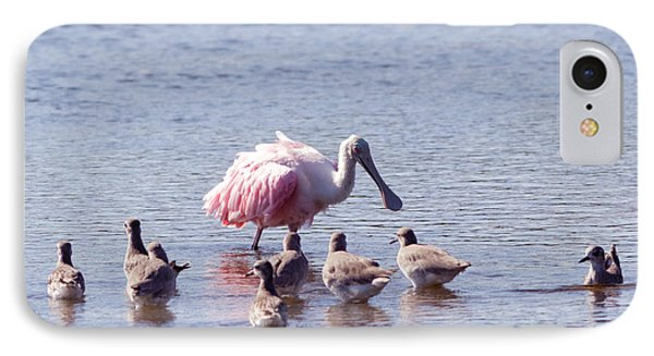 Spoonbill And Willets IPhone Case by Natural Focal Point Photography