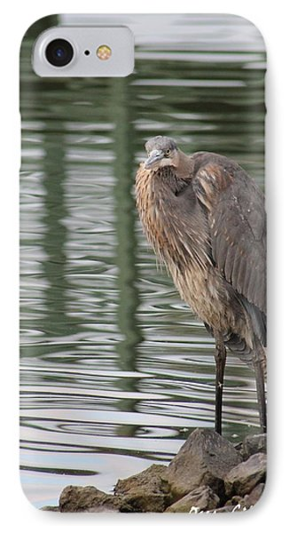 IPhone Case featuring the photograph Spotted By A Great Blue Heron by Robert Banach