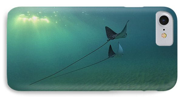 Spotted Eagle Rays During Sunset IPhone Case by Brad Scott
