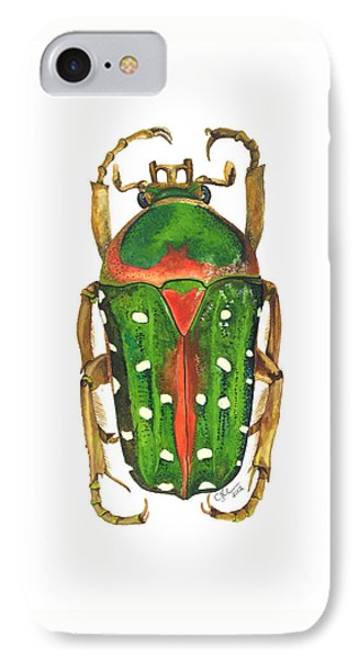 Spotted Flour Beetle IPhone Case by Cindy Hitchcock