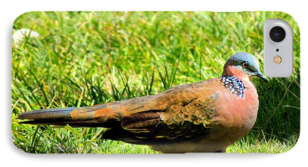 IPhone Case featuring the photograph Spotted Nape Dove by Kristine Merc