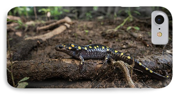 Salamanders iPhone 7 Case - Spotted Salamander (ambystoma Maculatum by Pete Oxford