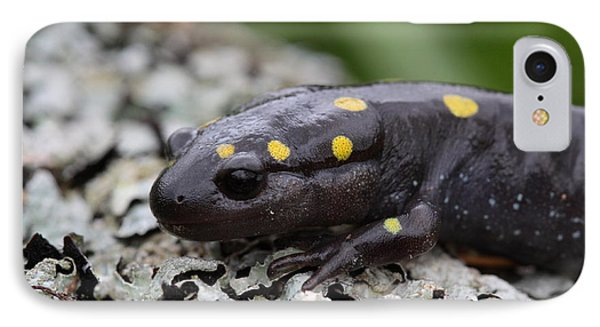 Spotted Salamander Phone Case by Bruce J Robinson