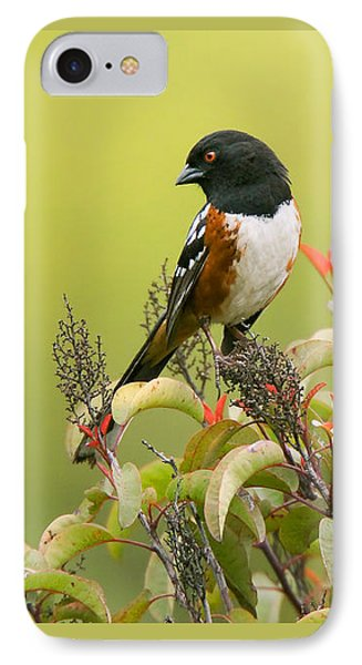 Spotted Towhee IPhone Case by Ram Vasudev