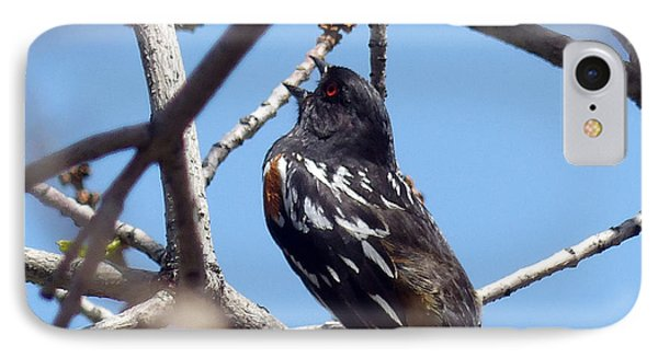 Spotted Towhee Singing IPhone Case