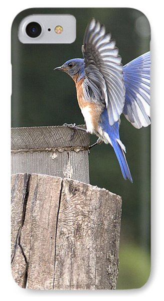Spread Your Wings IPhone Case by John Crothers