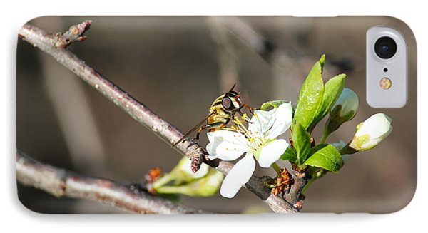 IPhone Case featuring the photograph Spring Bee On Apple Tree Blossom by Ryan Crouse