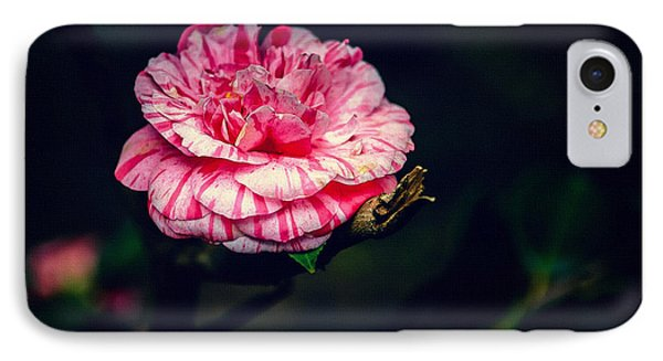 Spring Bloom In Portugal IPhone Case