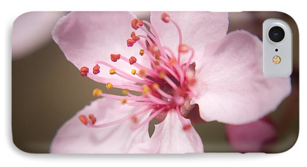 Spring Blooms 6697 Phone Case by Timothy Bischoff