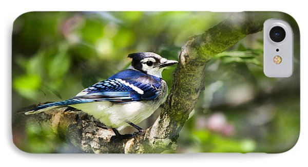 Spring Blue Jay IPhone 7 Case by Christina Rollo