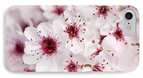 Spring Cherry Blossom IPhone Case by Elena Elisseeva