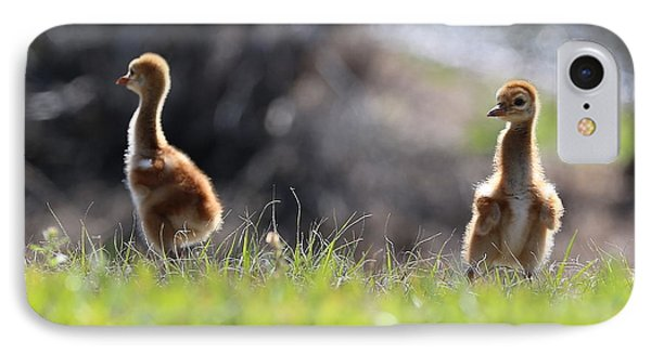 Spring Chicks In The Sunshine IPhone Case by Carol Groenen