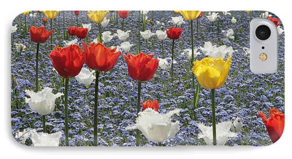 Spring  Colour IPhone Case by Paul Felix
