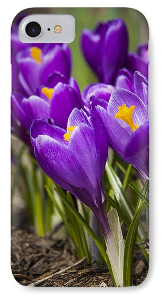 Spring Crocus Bloom IPhone Case by Adam Romanowicz