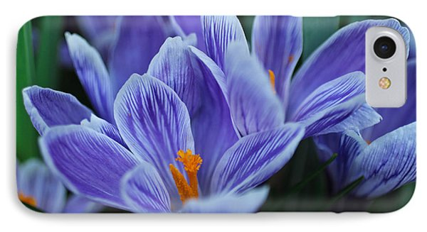 Spring Crocus IPhone Case by Julie Andel
