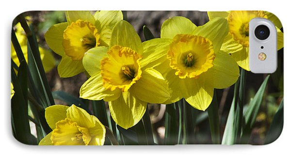 Spring Daffodils Phone Case by Christina Rollo