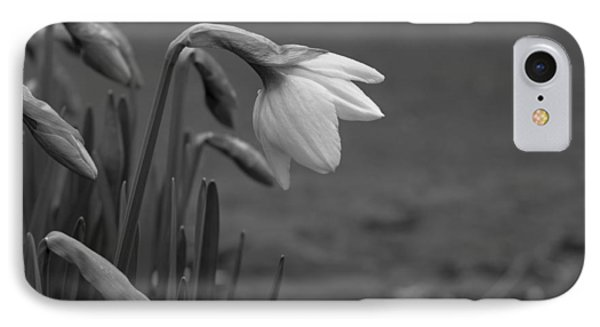Spring Daffodils IPhone Case by Ron Roberts