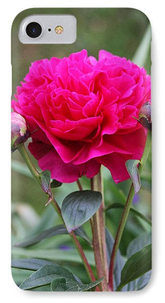 IPhone Case featuring the photograph Spring Flowers by Vadim Levin