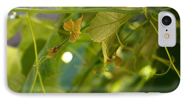 IPhone Case featuring the photograph Spring Green Grape Vines by Adria Trail