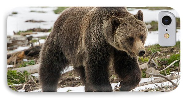 IPhone Case featuring the photograph Spring Grizzly Bear by Jack Bell