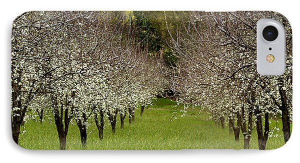 Spring Has Sprung Phone Case by Bill Gallagher