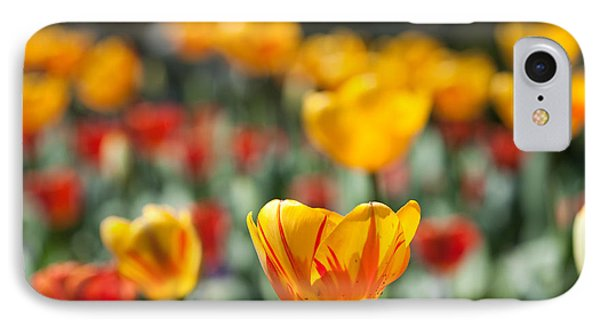 Spring Is Upon Us IPhone Case by Nathan Rupert