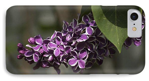 Spring Lilac IPhone Case by Elsa Marie Santoro