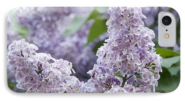 Spring Lilacs In Bloom IPhone Case by Juli Scalzi