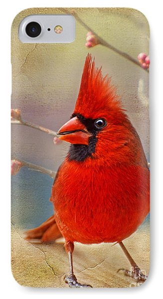 Spring Male Norther Cardinal IPhone Case by Debbie Portwood