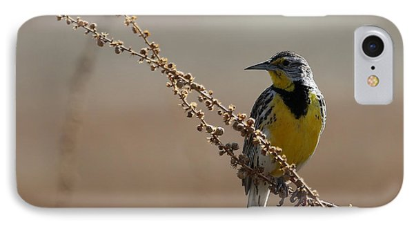 Spring Meadowlark IPhone Case by Marty Fancy