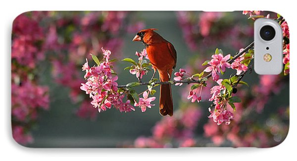 Spring Morning Cardinal IPhone Case