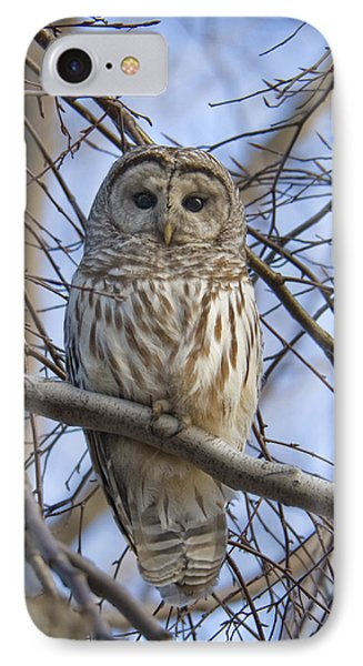 Spring Owl IPhone Case by Timothy McIntyre