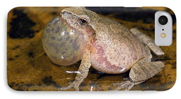 Spring Peeper Calling IPhone Case by Steve Gettle
