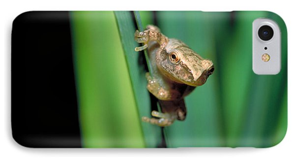 Spring Peeper Frog IPhone Case by Larry West