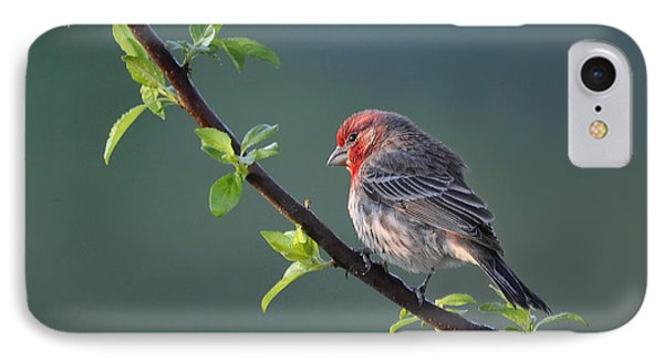 IPhone Case featuring the photograph Song Bird In Spring by Nava Thompson