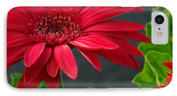 Spring Red IPhone Case