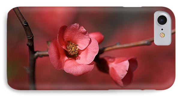 Spring Richness - Flowering Quince Phone Case by Joy Watson