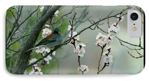 Spring Snow In Apricots IPhone Case by Susanne Still