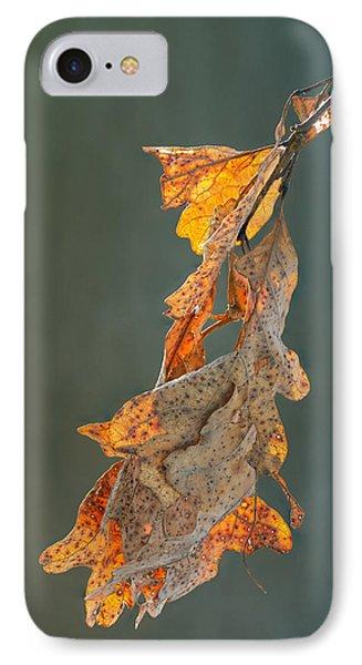 Spring Sun On Winter Oak Leaves IPhone Case