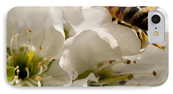 Spring Time Cherry Blossoms Phone Case by Artist and Photographer Laura Wrede