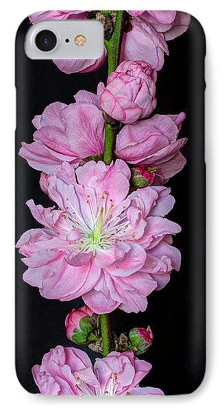 Spring's Arrival  IPhone Case by Heidi Smith
