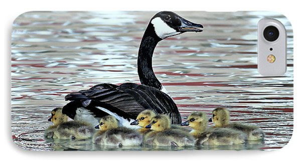 Spring's First Goslings IPhone Case by Elizabeth Winter
