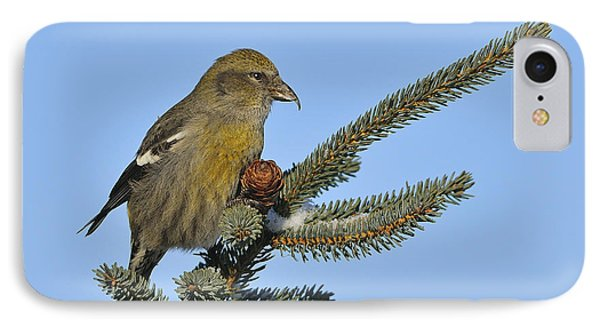 Spruce Cone Feeder IPhone Case by Tony Beck