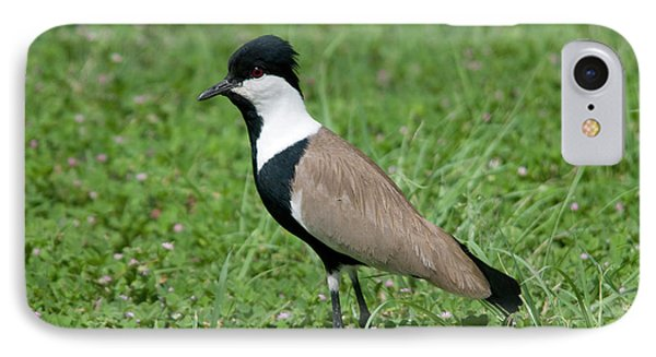 Spur-winged Plover IPhone 7 Case by Nigel Downer