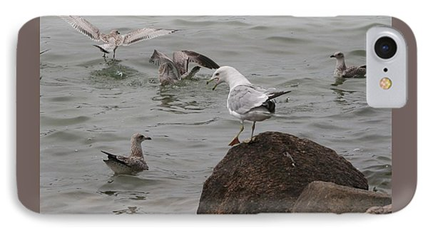 Squabbling Gulls-ii IPhone Case by Patricia Overmoyer