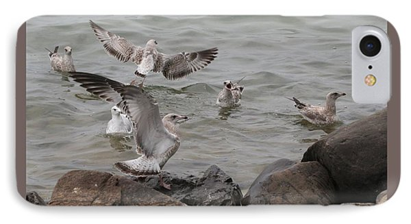 Squabbling Gulls IPhone Case by Patricia Overmoyer